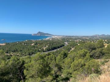 7 plots in Altea
